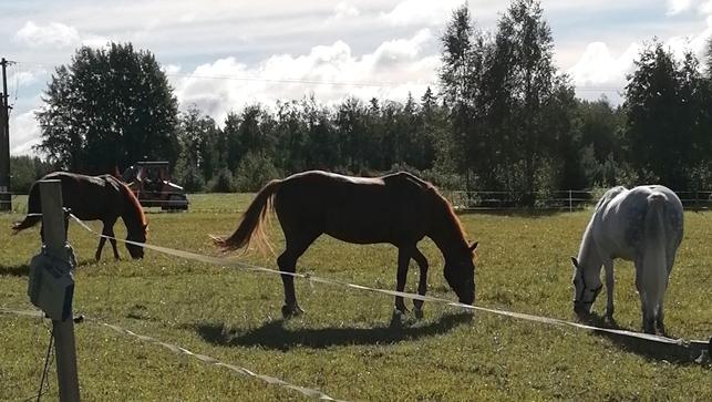 Hevosia Kuuselan Ratsutallilla.